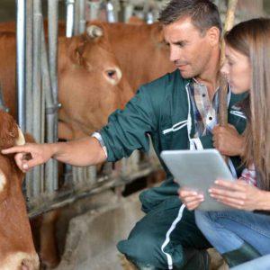 Curso ayudante técnico veterinario atv