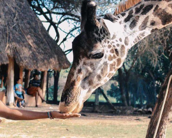 Estudiar curso de cuidador especialista en parques zoológicos