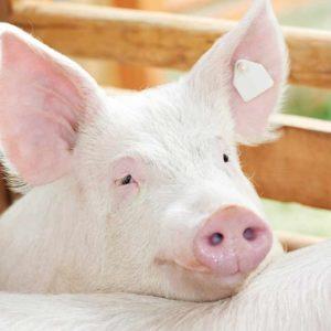 estudiar máster en cría, recría y cebo en ganadería ecológica