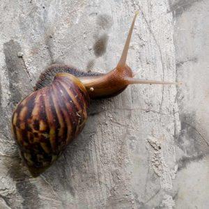 estudiar máster en cuidado y cría de caracoles
