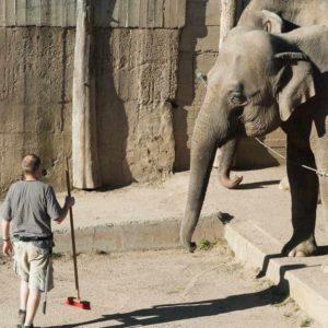 Fórmate con el Máster en Cuidados de Animales en Zoológicos y Acuarios
