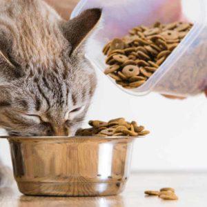 Fórmate con el Máster en Dietética y Nutrición Veterinaria
