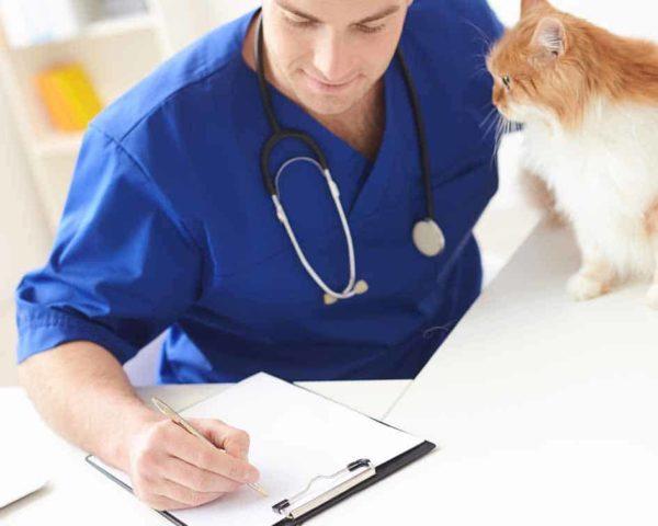 Estudia este Máster en Enfermería Veterinaria