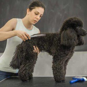 estudiar máster en estética canina y felina