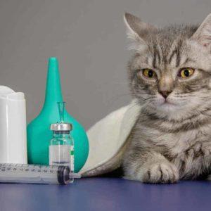 Cursar Máster en Farmacia Veterinaria