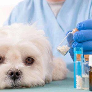 Estudia el Máster en Homeopatía Veterinaria