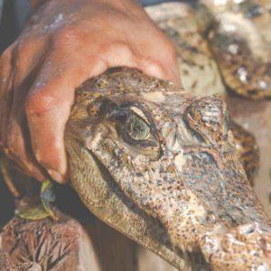 estudiar máster en inmovilización y manipulación de animales salvajes
