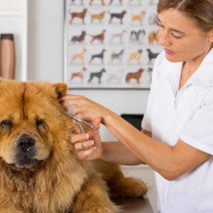 estudiar máster en peluquería canina