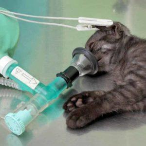 estudiar máster en quirófano veterinario