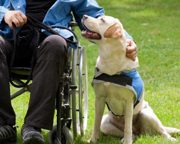 estudiar máster en terapia asistida con perros
