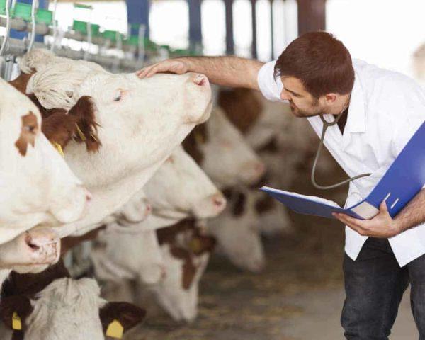 estudiar Máster en técnicas de diagnóstico veterinario
