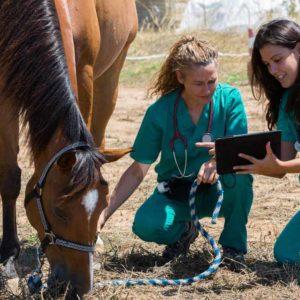 estudiar máster en valoración morfológica y económica del caballo