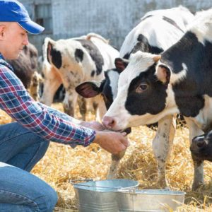 estudiar máster en bienestar animal para ganaderos