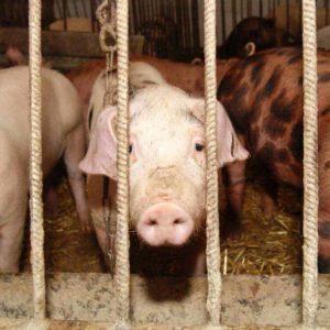 estudiar máster en bienestar animal para transportistas