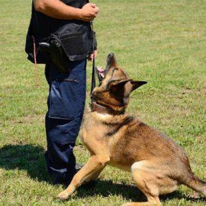 Fórmate como Perito Judicial en Adiestramiento y Conducta Canina