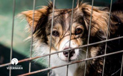 Abandono animal: cómo ayudar a los animales sin hogar