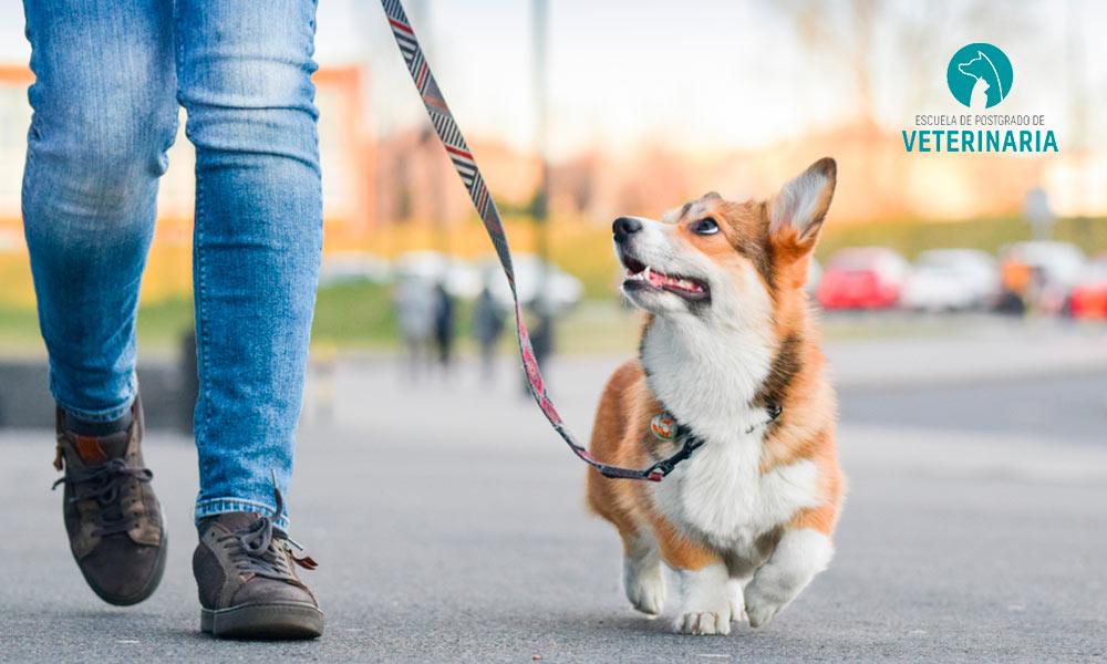 Conoce las pautas de adiestramiento canino y los factores que influyen en la conducta del perro