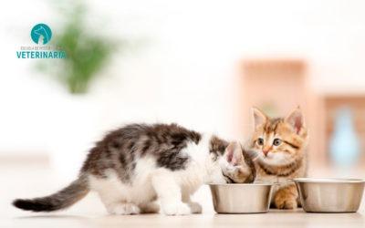 Cómo debe ser la alimentación del gato según su etapa de vida