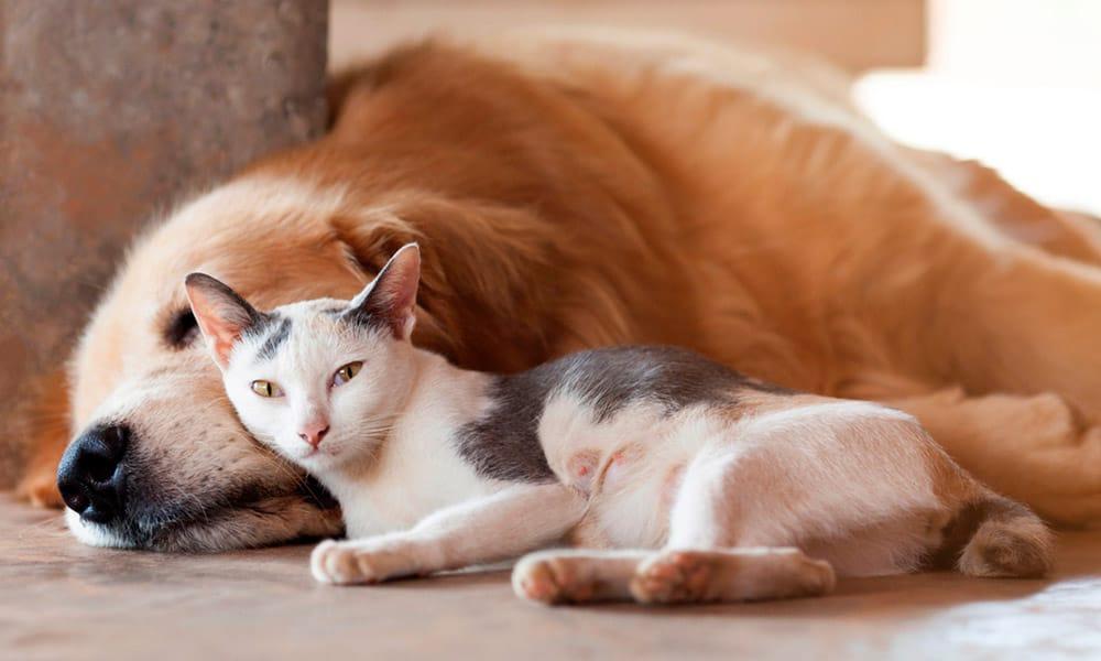 Animales domésticos y coronavirus: todo lo que debes saber