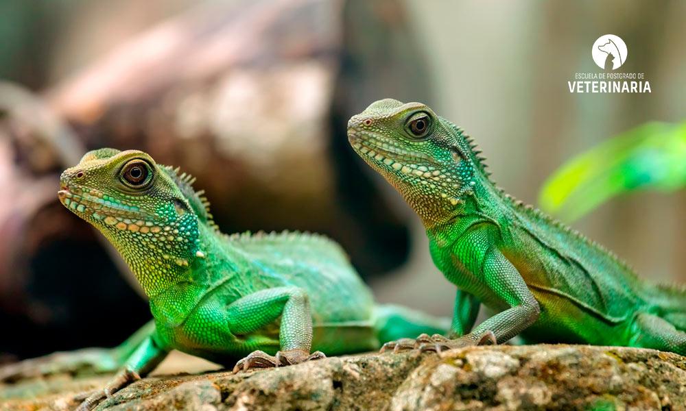 8 curiosidades sobre los animales reptiles