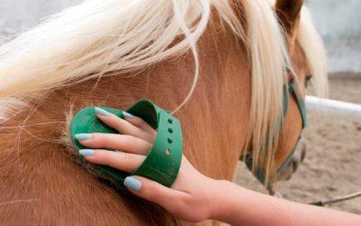 Cuidados del caballo durante el confinamiento | Guía completa