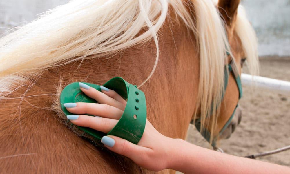 Conoce los principales cuidados del caballo durante la confinamiento