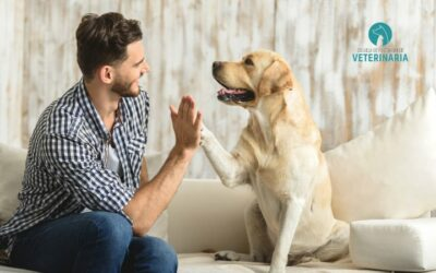 5 cuidados del perro imprescindibles para su bienestar