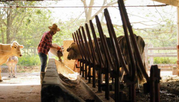 Estudiar el Curso de Dietética y Nutrición Animal + Dietética y Nutrición en Ganadería