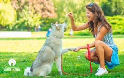 5 pautas de educación canina para un adiestramiento positivo