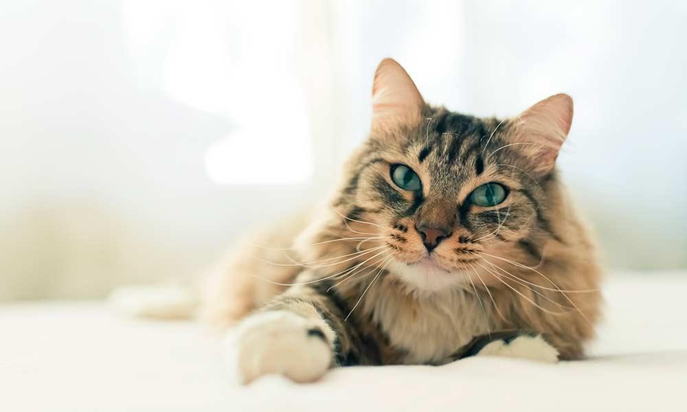 Esterilización en gatos: todo lo que debes saber