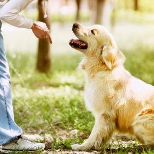 Estudiar el Máster en Educación Animal y formarse en adiestramiento canino
