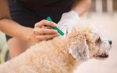 Pipetas para perros: todo lo que debes saber