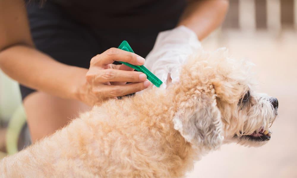 Pipetas para perros: guía completa de uso